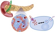 Update on GLP-1 Receptor Agonists in the Management of Type 2 Diabetes Mellitus