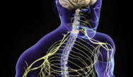 Electrodiagnostic Medicine and Neuromuscular Disorders - A Comprehensive Review