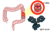Advances in Biological Therapy of Crohn's Disease and Ulcerative Colitis