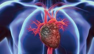 Improving Outcomes of Patients with Heart Failure: Implementation of Guideline-Directed Medical Therapy and Effective Transitions of Care