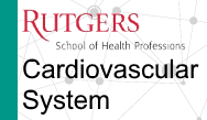 PANCE/PANRE Review: Cardiovascular System