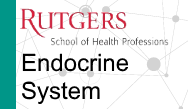 PANCE/PANRE Review: Endocrine System