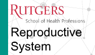 PANCE/PANRE Review: Reproductive System