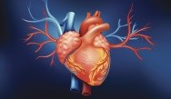 Mitral Valve Operations Now Fastest-Growing Heart Surgery