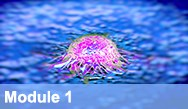 Emerging Strategies in Novel Targeted Therapies for Genitourinary Cancers (Prostate Cancer, Renal Cell Carcinoma and Urothelial Bladder Carcinoma) - Module 1