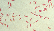 Appropriate Antibiotic Selection in Multidrug-Resistant Pneumonia with Gram-Negative Bacteria: Identifying Pathogens and Related Antimicrobial Stewardship