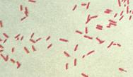 Gram-Negative Bacteria: Patient Case Study