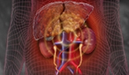 Evidence-Based Management of Hepatorenal Syndrome: Preserving Renal Function in Patients with Portal Hypertension