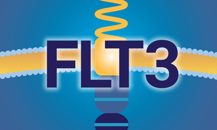 FLT3+ AML Patients: Assessing the Evidence for New Targeted Treatments