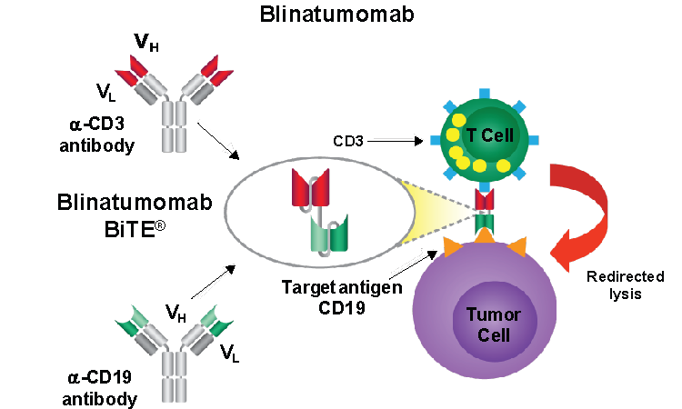 Update on Treatment Options for Acute Lymphoblastic Leukemia with An Emphasis on CD19, CD22 Monoclonal Antibodies and Anti-CD19 CAR T-cell Therapy