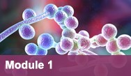 Contemporary Strategies for Treating Invasive Fungal Infections in Immunocompromised Patients—Module 1