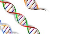 The Role of the Genetic Counselor in Pompe Disease