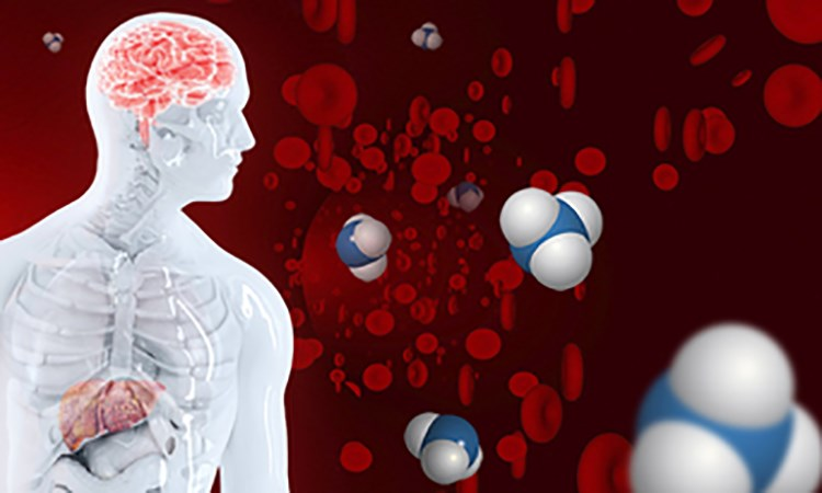 Implementing Effective Acute and Transitional Care Strategies for Hepatic Encephalopathy